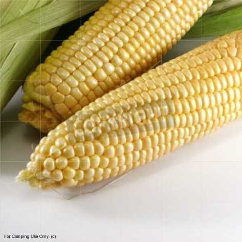 Our Daily Crops: What did You Know about Maize??