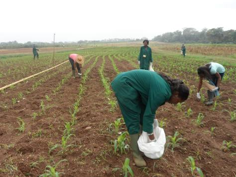 When Young Ladies are Involve in Agriculture